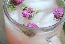 Foraging & Herbal Remedies