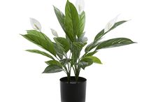 Indoor plant for styling