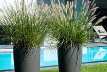 Large plants for outside