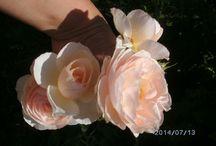 flori si roze