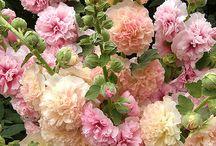 kwiaty...malwa