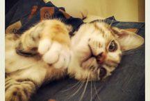 It's a cat life!