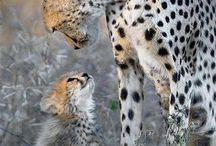 hayvan sevgisi / anne ve yavru hayvanlar