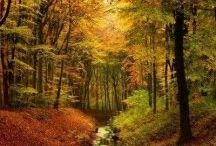 Времена года - осень,зима,весна