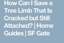 Tree limb repair