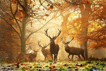 I love Autumn <3 / All beauty of Autumn