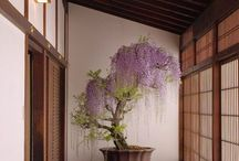 Home - Japanese style