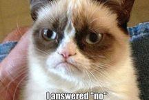 Grumpy Cat / by Wendy Vincent