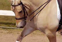 Fjording horse