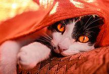 Cat photography / Cat photos by Agata Szymczak