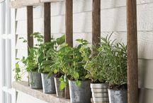 pals i plantes