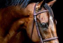 Horse/Caballos