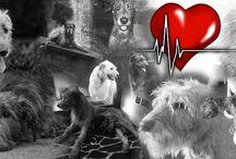 #Irish Wolfhounds
