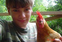 Backyard Chickens Raleigh
