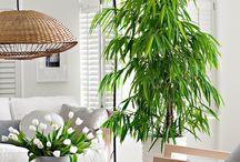 Полезные растения в интерьере / Все-таки весна вдохновляет и на озеленение нашего интерьера…Сегодня мы вам представим интерьерные растения, которые не только украсят, но и очистят нам воздух.