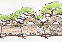 盆栽と技法