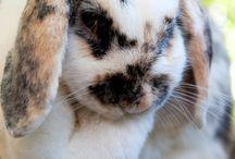 Bunnies! / My recent addiction, bunnies!