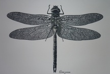 Paper Cuts: Nature / Things found in the great outdoors recreated in paper!