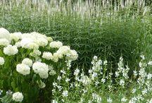 jardines!!!!