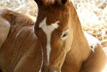 Horses ❤