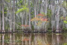 Caddo Lake State Park Photographs / Caddo Lake is a 25,000 acre swamplands that is home to the largest cypress forest in the world. To really appreciate this area, you need to see it by boat. Mysterious passageways and canals wind through cypress forests draped in Spanish moss, and every turn offers a new and unique view of the Texas landscape