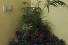 Landscaping on terrace