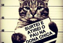 Pau no gato