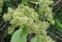 Bible flowers