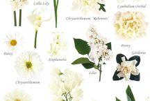 Blomsterlære