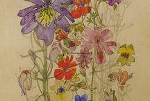 Mackintosh botanical illust