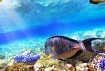 Sharm el Sheikh / Offerte Sharm el Sheikh Last Minute Viaggi Pacchetti Volo più Hotel o Villaggi All Inclusive Con Sconti fino al 70%