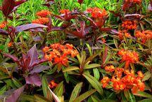 Bungalow Garden