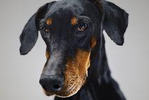 Hundens hälsa / Tips på hur du får din hund att må bra.