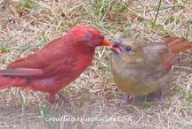 BACKYARD BIRDS / All about birds that visit the house and yard.