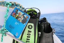 """The """"Fox"""": our daily diving boat / The daily boat used for divers & his wonderful team"""