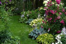 Kleiner schöner Garten