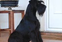 Dogsbession