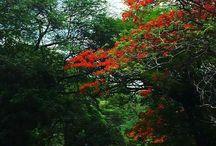 Nordeste - Brasil