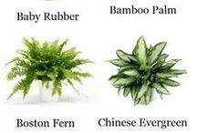 Plant en interieur / Plant en interieur
