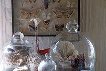 Fanales cristales y vidrios