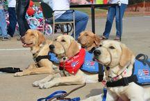 Patriot Paws Service Dogs / Www.patriotpaws.org
