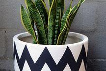 Indoor plant idea