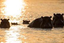Fotoreise Botswana / http://www.stefanopaterna.com/fotosafari-afrika-fotoreise-botswana/