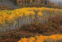 Fall Colors / by Debbie Shelley Blair