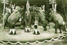 We Love the Circus / This is all about the different facets of circus life.