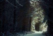 Enchanted Forests & Wondrous Woodland