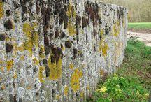 lichens/concrete