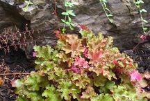 Gardens & Planting Plans / Design ideas for your home garden.