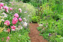 Wild (flower) gardens