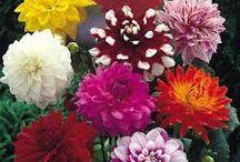 Tia Flowers